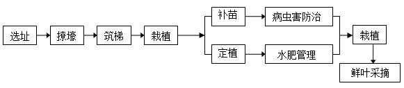 有机茶生产示范基地种植工艺流程图