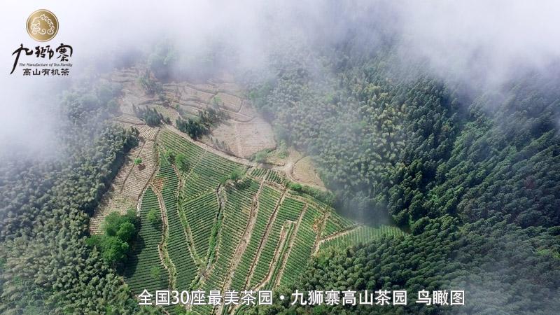 高山茶园视频,航拍中国,福寿山茶叶基地视频